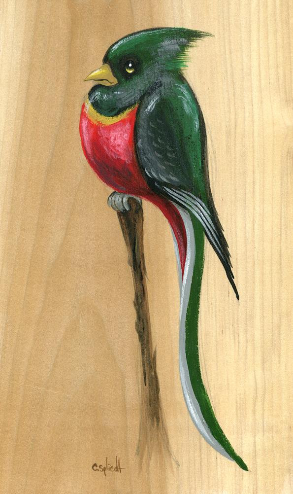 birdie056