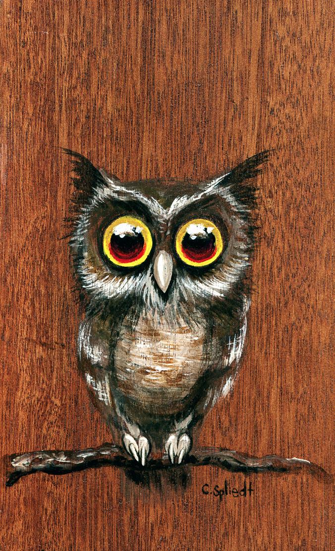 owl816