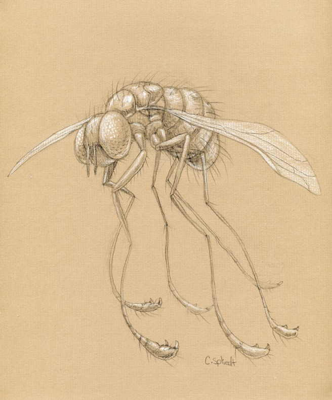 fly-charcoal-paper451.jpg