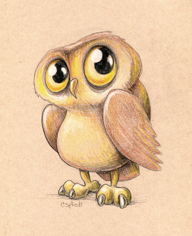owl-illustration932