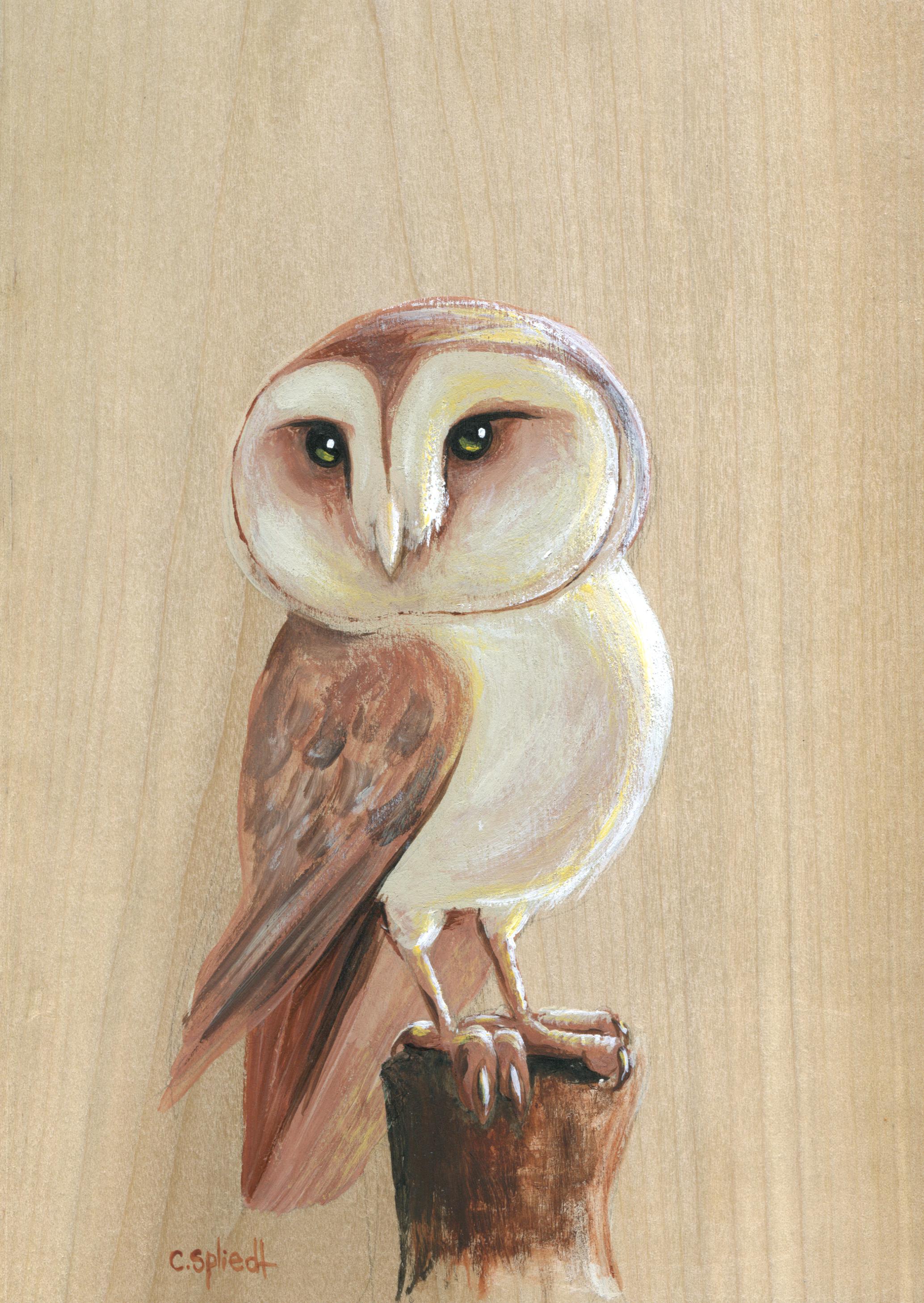 barn-owl060.jpg